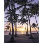 Palmtrees on Beach