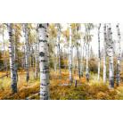 Colorful Aspenwoods